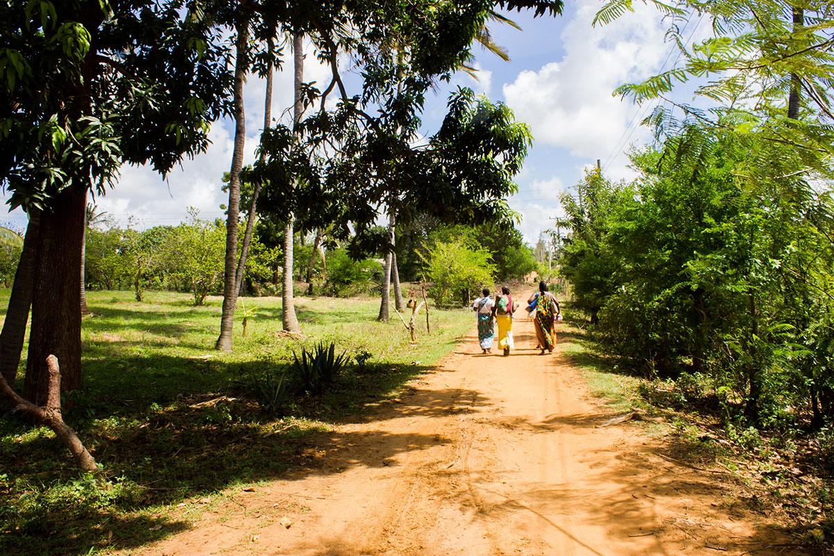 Grüne Wiesen und sandige Wege prägen die Landschaft an der Ostküste Kenias.